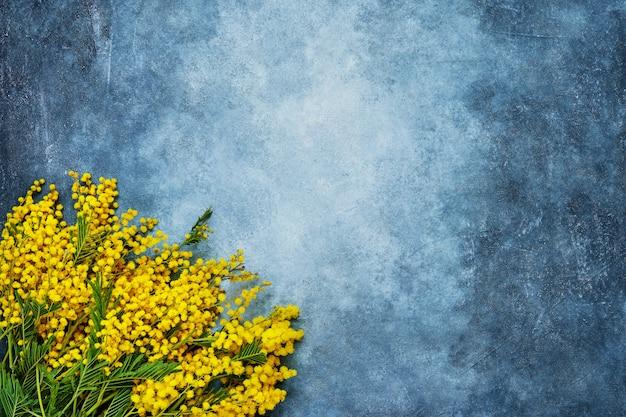 Mimose blüht blumenstrauß auf blauem hintergrund. textfreiraum, ansicht von oben. Premium Fotos