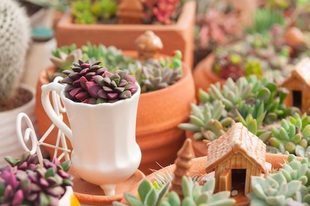 Mini-garten dekoration mit kaktus und keramik-objekt Premium Fotos