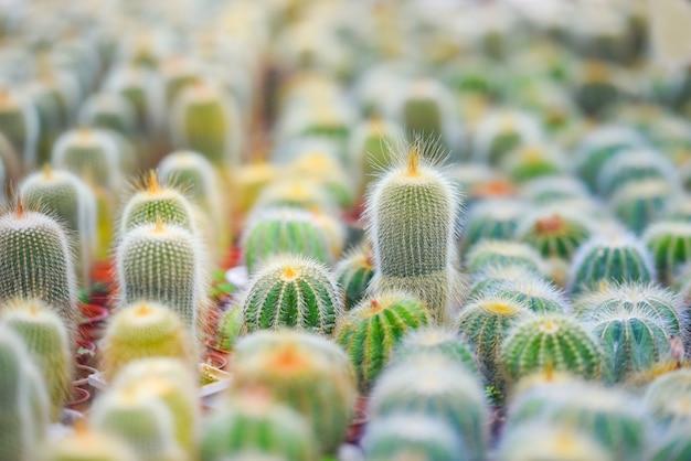 Miniaturkaktustopf verzieren im garten - verschiedene arten schöner kaktusmarkt oder kaktusbauernhof Premium Fotos