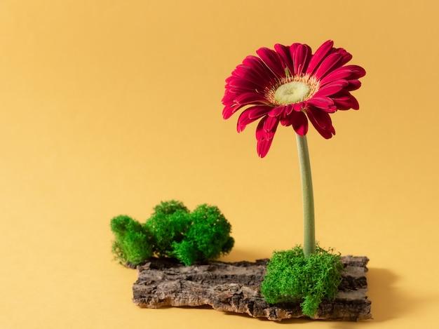 Minimale zusammensetzung mit gerberablume, moos und rinde Premium Fotos
