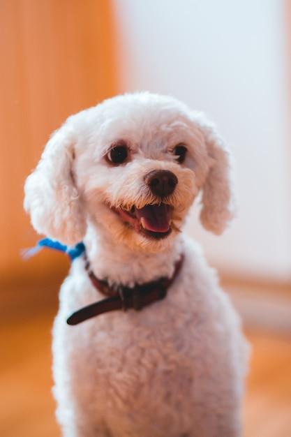Mittelbeschichteter weißer hund Kostenlose Fotos