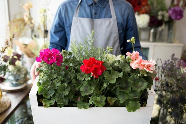 Mittelteil eines männlichen floristen, der hortensiebüsche in der hölzernen kiste hält Kostenlose Fotos