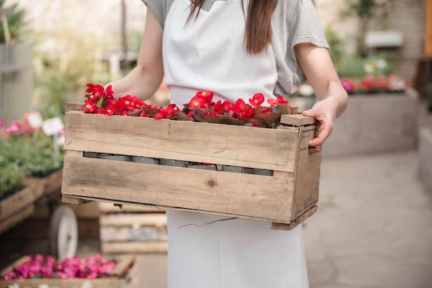 Mittelteilansicht der hand einer frau, die hölzerne kiste mit schöner roter begonie hält, blüht Kostenlose Fotos