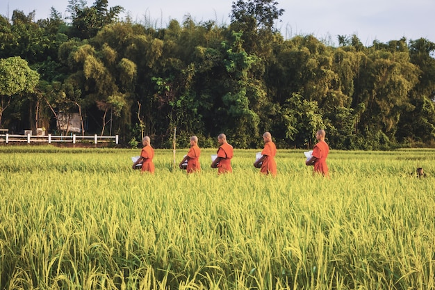 Mönch mit paddy-reisfeld in thailand Premium Fotos