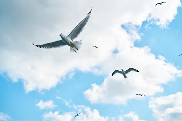 Möwen fliegen mit wolken hintergrund Kostenlose Fotos