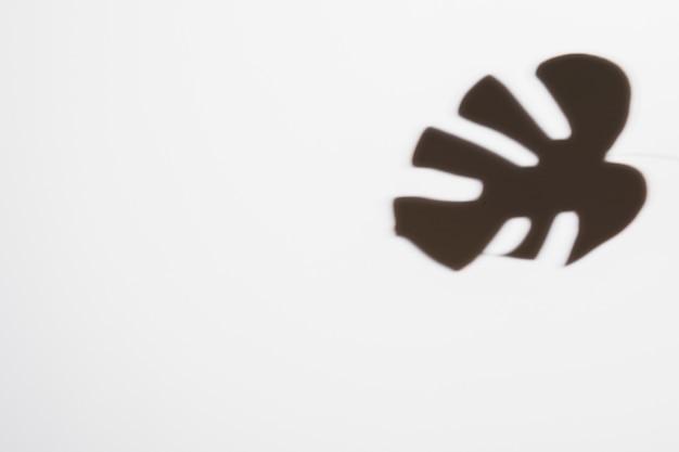 Monstera-blatt des dunklen schwarzen auf weißem hintergrund Kostenlose Fotos