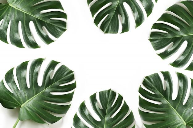 Monstera laub als rand auf weiß. isoliert mit sommer-rahmen für design. Premium Fotos