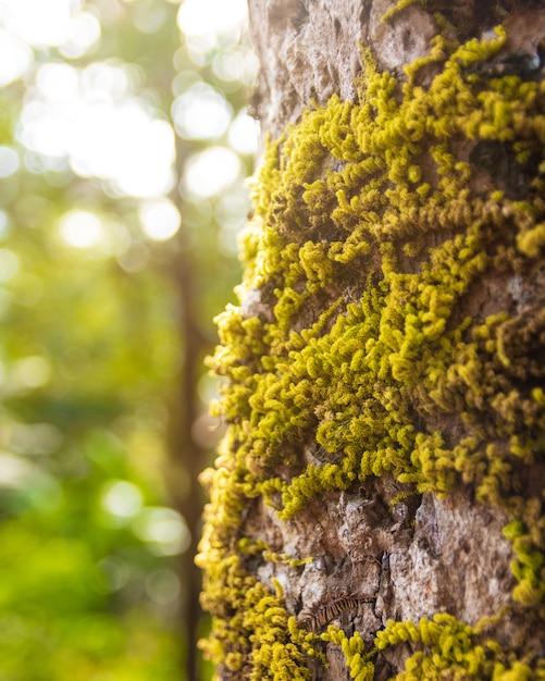 Moos bedeckt auf alter baumrinde im naturhintergrund Premium Fotos