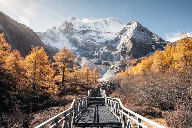 Mt. xiannairi mit goldenem kiefernwald auf höhe im herbst Premium Fotos