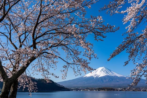 Mt. zeit fujis im frühjahr mit kirschblüten bei kawaguchiko fujiyoshida, japan. Premium Fotos