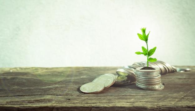 Münzen mit jungpflanze auf tabelle mit hintergrundzementwand. Premium Fotos