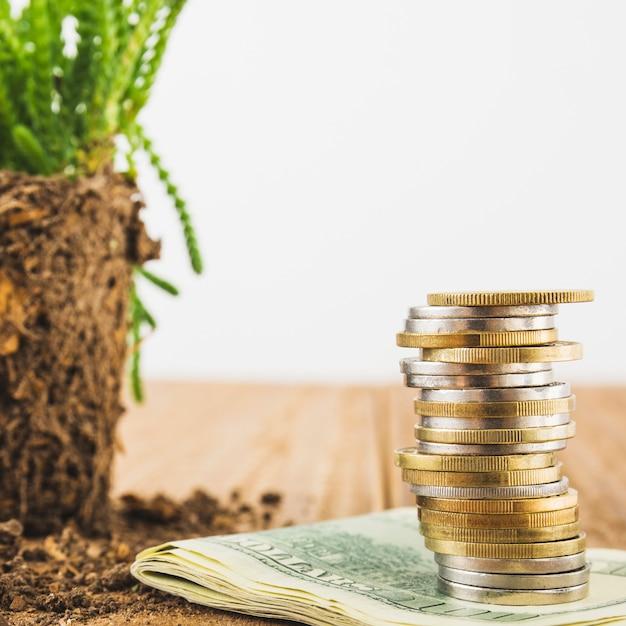 Münzen mit pflanze auf dem tisch Kostenlose Fotos