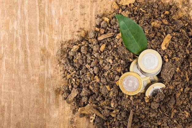 Münzen mit pflanze im boden Kostenlose Fotos