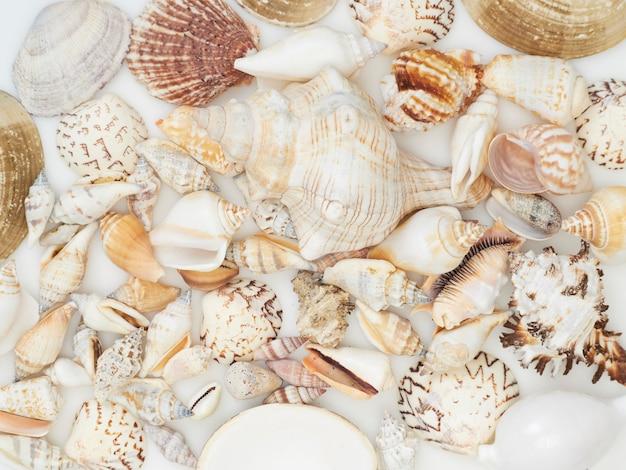 Muschelhintergrund mit vielen verschiedenen muscheln häufte zusammen, draufsicht an Premium Fotos