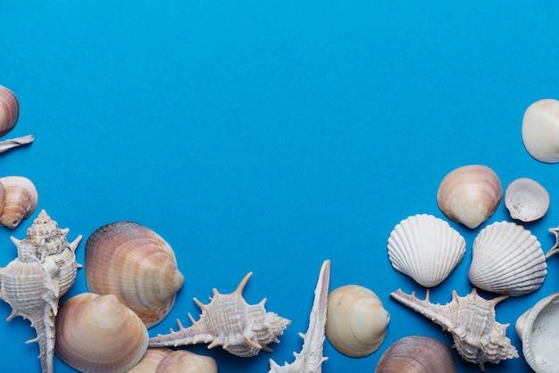 Muscheln auf dem blauen hintergrund. sommerkonzept, ansicht von oben nach unten mit kopierraum für text Premium Fotos