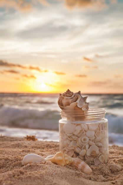 Muscheln in einem grasglas im sommer gesammelt Premium Fotos
