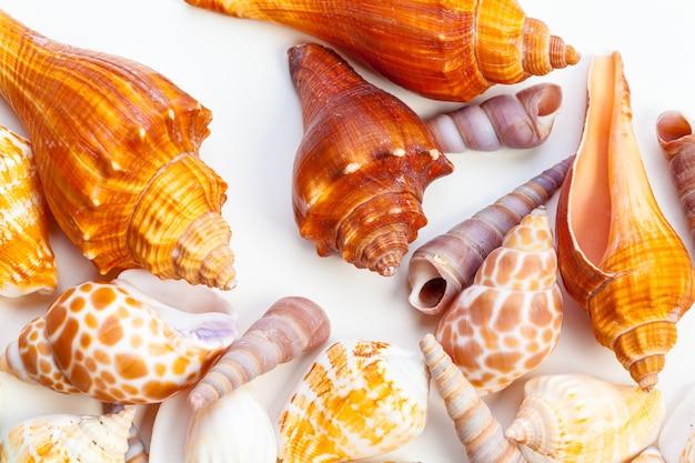 Muscheln isoliert Premium Fotos