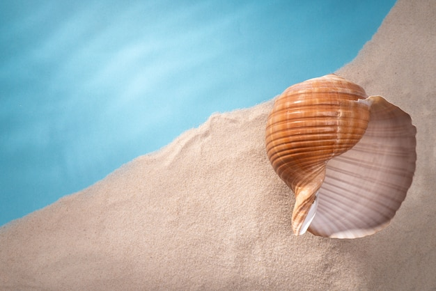 Muscheln, sichere unterbringung für meereslebewesen Premium Fotos
