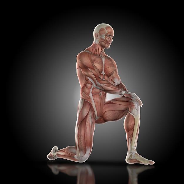 Muskel-Mann mit einem Knie auf dem Boden | Download der kostenlosen ...