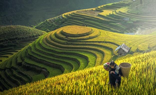Mutter und dauther hmong, arbeitend an reisterrassen, mu cang chai, vietnam Premium Fotos