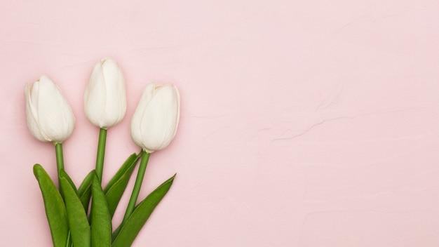 Muttertags-tulpen mit kopierraum Kostenlose Fotos