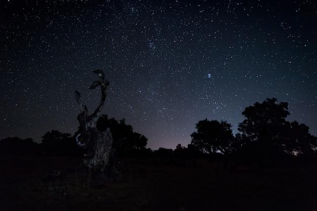 Nachtlandschaft mit gebranntem baum. Premium Fotos