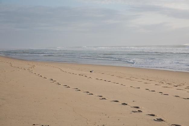 Nackte schritte im sand am strand | Premium-Foto
