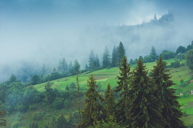 Nadelbäume in einem regnerischen nebelwald Premium Fotos