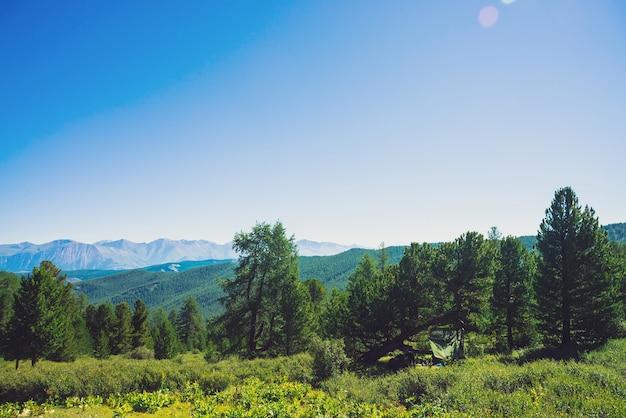 Nadelwald gegen hügel mit waldbedeckung und riesigen bergen und gletschern Premium Fotos