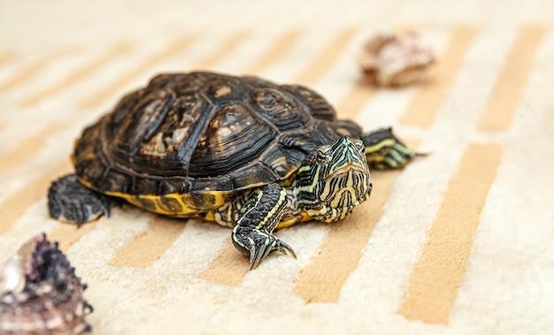 Nahaufnahme auf rubeared schildkröte kriechen Premium Fotos