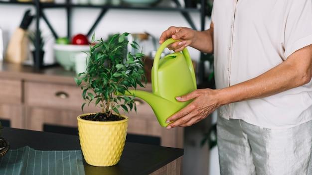 Nahaufnahme der älteren frau die topfpflanze auf dem küchenzähler wässernd Kostenlose Fotos