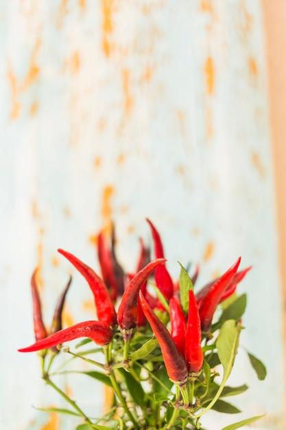 Nahaufnahme der anlage des roten paprikas gegen strukturierten hintergrund Kostenlose Fotos