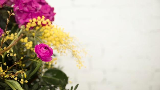 Nahaufnahme der gelben mimose und der rosarose gegen weißen hintergrund Kostenlose Fotos