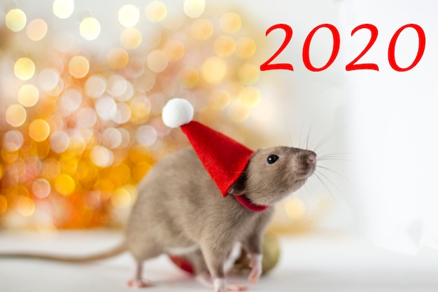 Nahaufnahme der goldenen braunen netten kleinen ratte in einem hut des neuen jahres auf leuchtender gelber unschärfe und weihnachtsball mit der aufschrift 2020 Premium Fotos