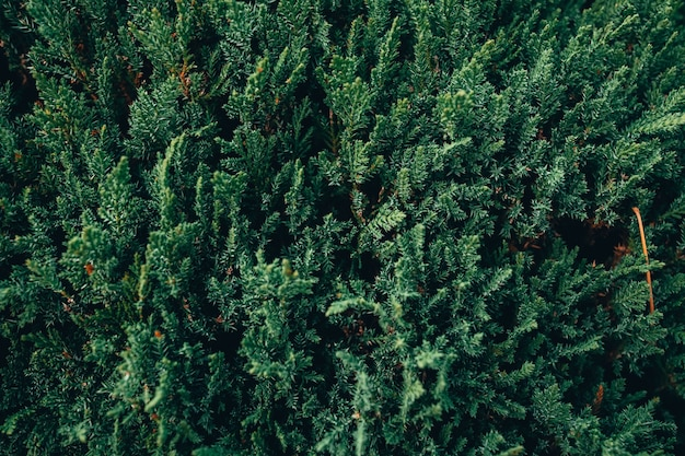Nahaufnahme der grünen tannenbaumzweige in einem wald Kostenlose Fotos