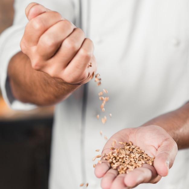 Nahaufnahme der hand des männlichen bäckers, die weizenkörner auf händen verschüttet Kostenlose Fotos