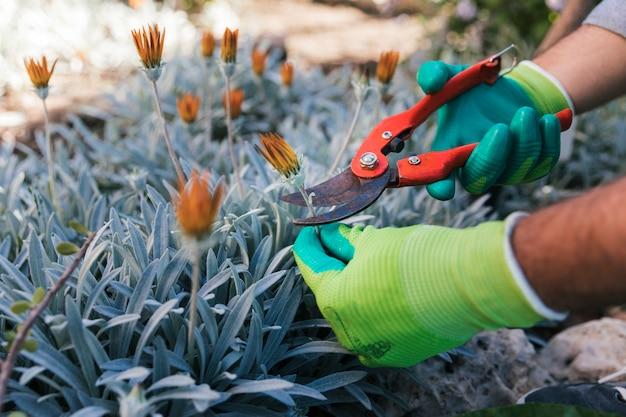 Nahaufnahme der hand eines männlichen gärtners, welche die blumen beschneidet Kostenlose Fotos