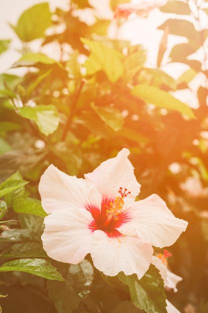Nahaufnahme der hibiscusblume auf anlage Kostenlose Fotos