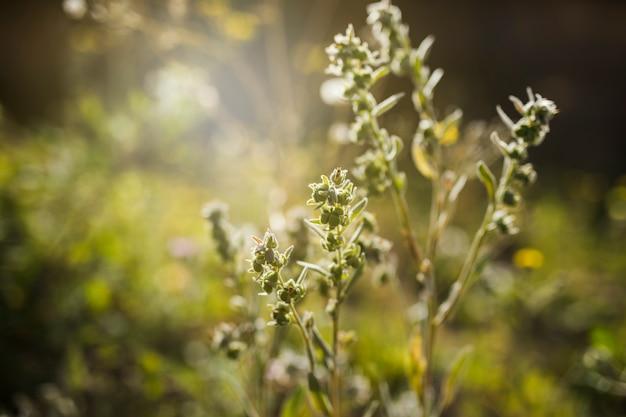 Nahaufnahme der pflanze Kostenlose Fotos