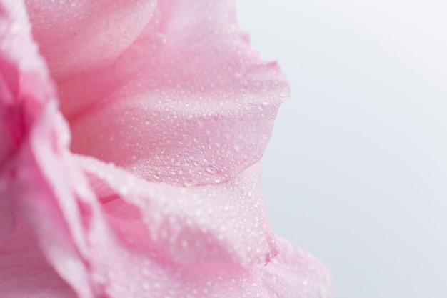 Nahaufnahme der rosarose mit unscharfem hintergrund Kostenlose Fotos