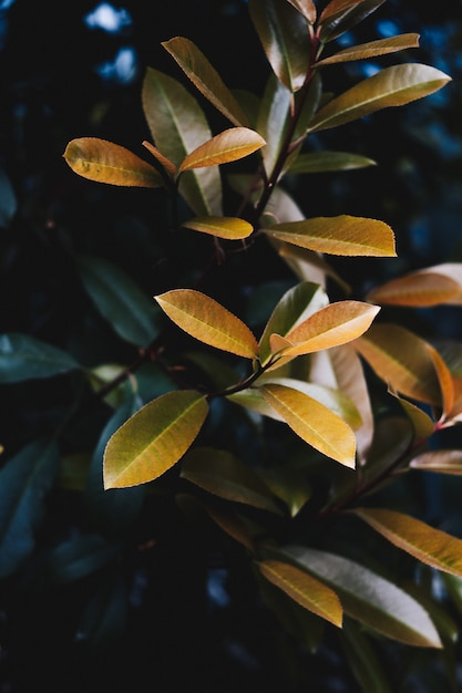 Nahaufnahme der schönen gelben blätter einer pflanze in einem botanischen garten Kostenlose Fotos