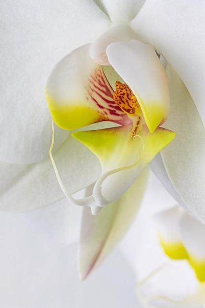 Nahaufnahme der weißen orchideenblume Kostenlose Fotos