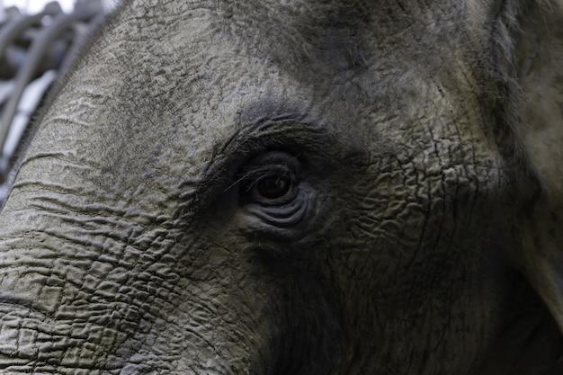 Nahaufnahme des auges eines elefanten Kostenlose Fotos