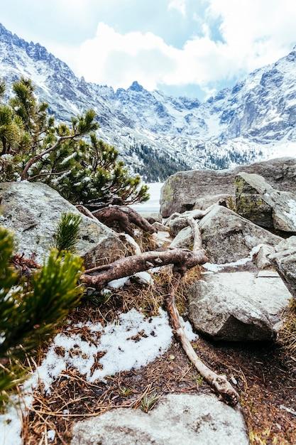 Nahaufnahme des gefallenen baums auf felsiger landschaft mit schneebedecktem berg Kostenlose Fotos