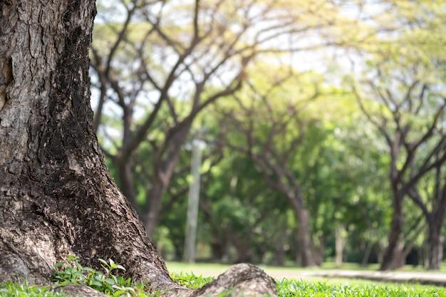 Nahaufnahme des großen stammes und des natürlichen unscharfen parks der bäume öffentlich Premium Fotos