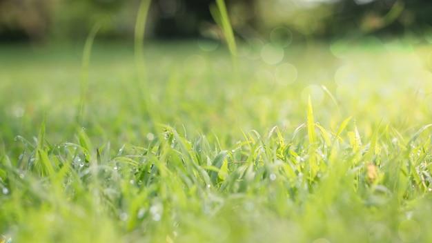 Nahaufnahme des grünen blattes auf unscharfem hintergrund im garten als hintergrund, neues tapetenkonzept. Premium Fotos
