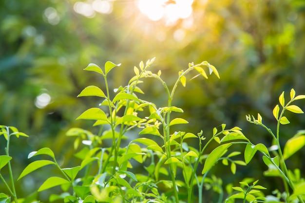 Nahaufnahme des grünen blattes auf unscharfem hintergrund im garten mit kopienraum unter verwendung als hintergrund, neues tapetenkonzept. Premium Fotos