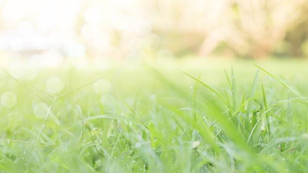 Nahaufnahme des grünen blattes auf unscharfem hintergrund im garten Premium Fotos