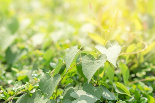 Nahaufnahme des grünen blattes im garten Premium Fotos