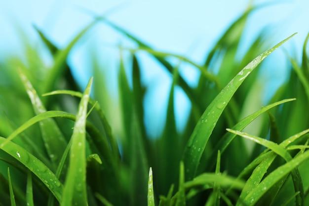 Nahaufnahme des grünen grases Kostenlose Fotos